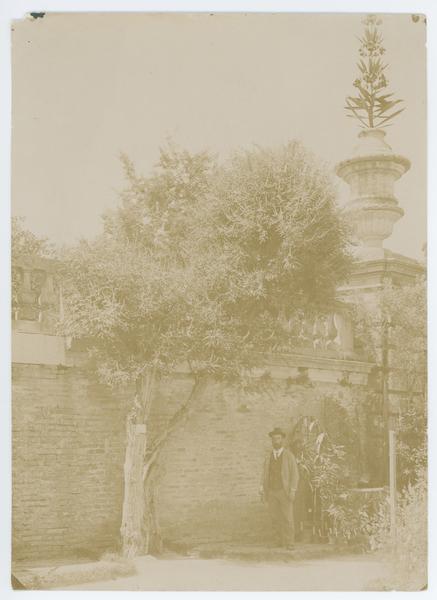 Orto botanico di Padova nel 189?. L' agnocasto, l' albero più vecchio