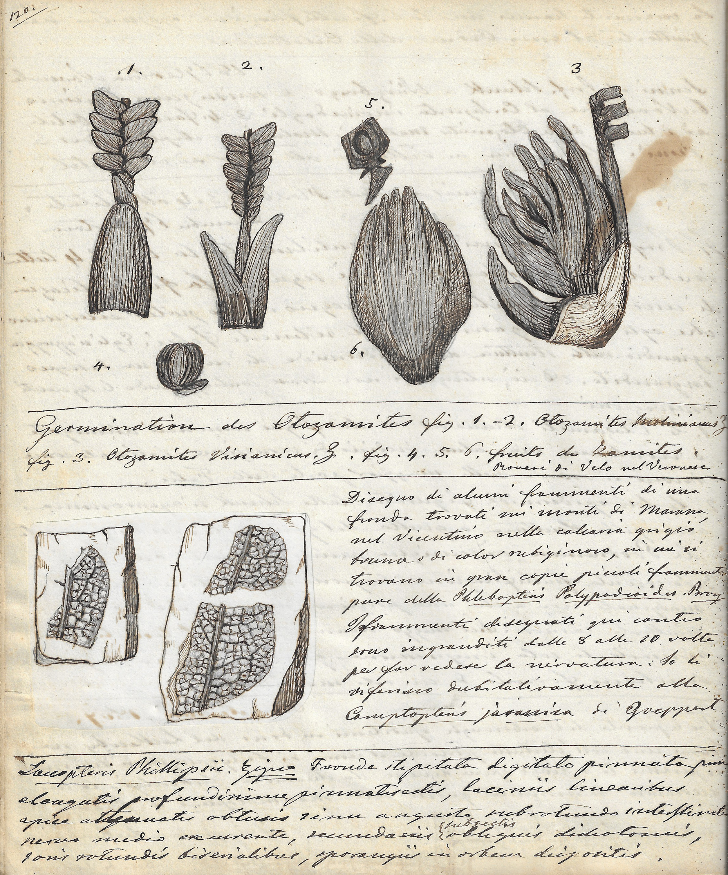 A page from Quaderno di campagna C